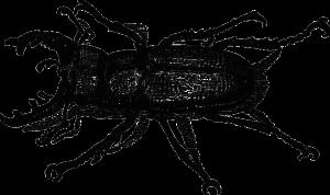 bug-47069_1280