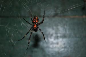spider-175262_640